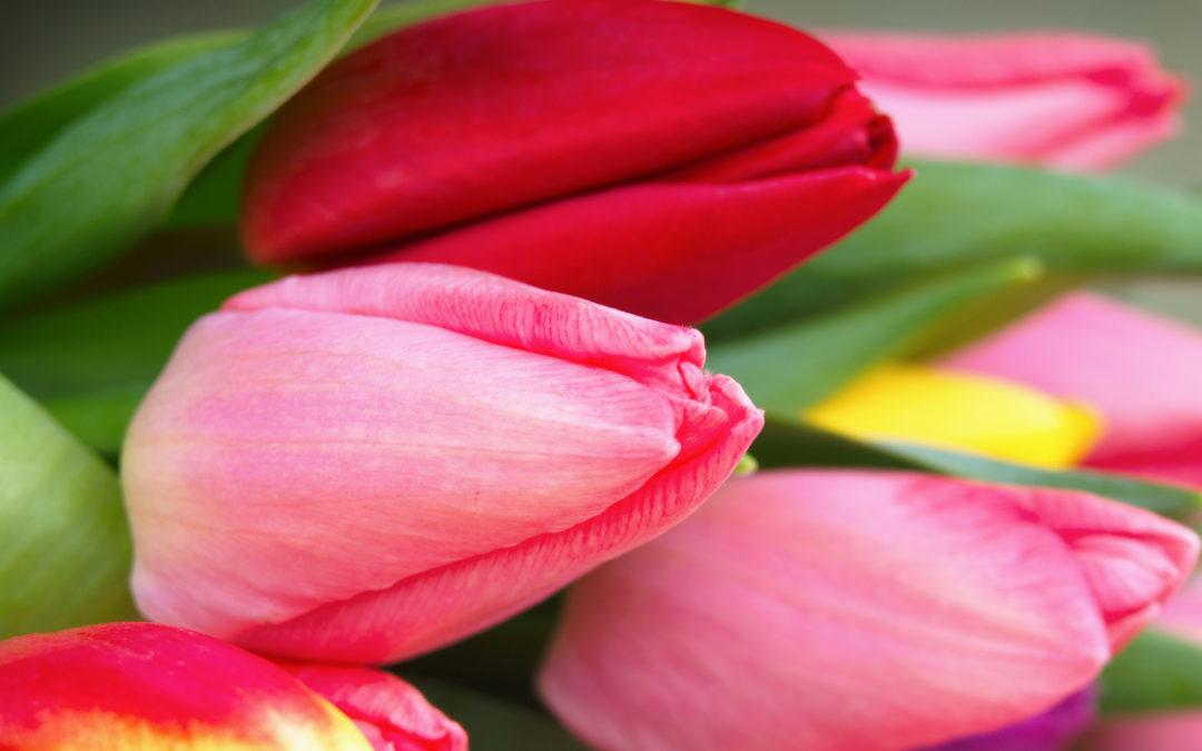Perfektion – Was das Gesetz des Lernens mit Tulpen zu tun hat